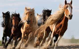 Все о лошадях для детей. Самые интересные факты о лошадях