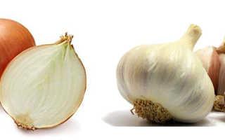 Чеснок и лук польза и вред для здоровья. Что полезнее — лук или чеснок для здоровья человека? Полезные свойства культур