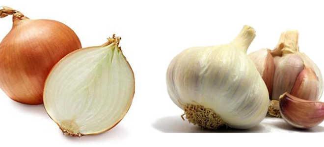 Что полезнее — лук или чеснок для здоровья человека? Полезные свойства культур. Лук и чеснок — полезные свойства и применение