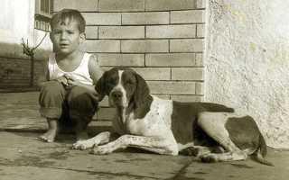 Самый черный день: как погиб Сенна. Айртон Сенна: биография, личная жизнь и семья, карьера автогонщика, трагическая гибель
