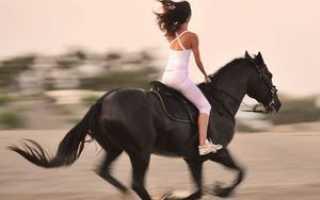 Помогает ли конный спорт похудеть. О пользе верховой езды. История верховой езды