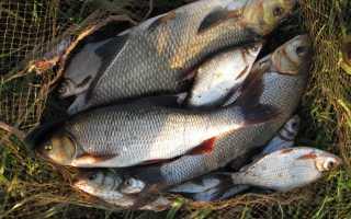 Какую рыбу лучше разводить в пруду. Корм для рыбы — выбор. Разведение рыбы в домашних условиях