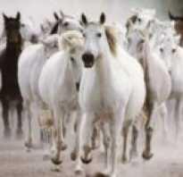 К чему снится конь коричневый. Конь коричневый