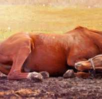Мертвые лошади во сне к чему снятся. К чему снится мертвая лошадь