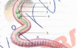 Биология таблица органы и системы органов животных. Системы органов животных