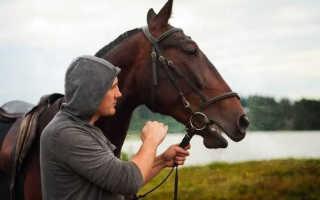 Какие есть профессии связанные с лошадьми. Где учиться на Ипполога. От помощника конюха до главного конюха