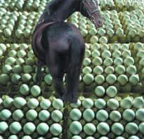Как кастрируют лошадь. Мерин или жеребец: зачем вообще кастрируют коней. Разница между мерином и жеребцом