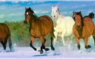 Лошади-Львы. Описание характера мужчин и женщин. Характеристика мужчин и женщин Львов, рождённых в год Лошади