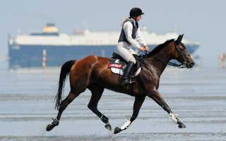 Шаг рысь иноходь или галоп. Рысь лошади: как ездить рысью правильно. Видео — Обучение независимой посадке на лошади