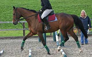Медленный шаг лошади. Аллюры лошадей и их характеристика. Видели ли вы как передвигаются кони рысью