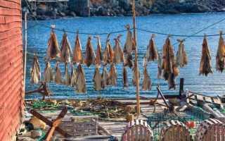 Вялим плотву в домашних условиях. Таранка: секреты приготовления сушено-вяленой рыбы в домашних условиях. Кбжу и состав для всего блюда