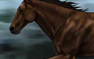 Как рисовать лошадь. Рисуем гриву коня