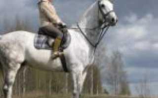 Теплокровные породы лошадей. Породы: Голландская. Теплокровные скакуны. Какие они