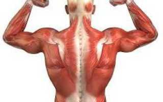 Тренировка мышц антагонистов на массу девушкам. Мышцы-антагонисты. Какие мышцы относятся к антагонистам, а какие к синергистам? Мышцы тела человека