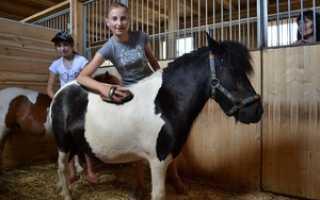 Кто такие пони? Шетлендский пони: описание породы, особенности ухода и разведение. Маленькая лошадка