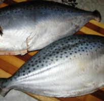 Масляная рыба холодного копчения польза и вред. Видео: Масляная рыба холодного копчения. Масляная рыба. Состав. Полезные свойства