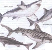 Таблица по биологии отряды костных рыб. Вопрос. Систематика хрящевых рыб, основные отряды акулы. Отряды Хрящевых и их характеристика