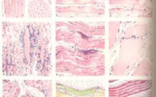 Атрофирование мышц лечение. Восстановление мышц ног после их атрофии