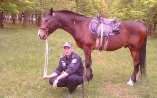 Профессии связанные с лошадьми для девочек. Работа в конной полиции. Плюсы и минусы профессии