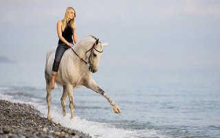 К чему снятся лошади женщине коричневые. К чему снится мужчине? Эзотерический сонник Если снится Конь