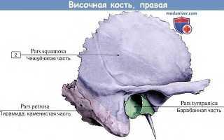 Сосцевидная вырезка височной кости. Височная кость: ее части, отверстия, каналы и их назначение