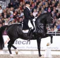 Эдвард гал биография. Тотилас — легендарная лошадь в выездке. Поворот на пике славы