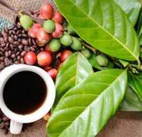 Принимать кофеин бензоат натрия перед тренировкой. Кофеин в таблетках перед тренировкой. Польза кофеина перед тренировкой