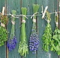 Лечебные травы для похудения. Состав трав для похудения рецепты. В каких пропорциях использовать и как принимать травы