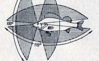 Признаки отличающие орган зрения рыб. Органы зрения рыб. Поведение хищных рыб в зависимости от особенностей зрения
