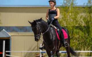 Чем полезен конный спорт и верховая езда! Чем для человека полезна верховая езда
