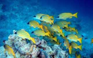 Удивительные косяки рыб. Косяк рыбы — что это такое