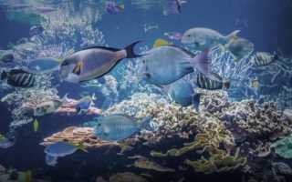 Как дышит рыба? Органы дыхания рыб. Как дышат рыбы под водой? Как дышат рыбы