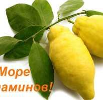 Почему лимон на ночь полезен для похудения. Сжигание жира с помощью лимона