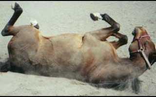 Происхождение, особенности употребления и значение фразеологизма «конь не валялся». Откуда пошло выражение «ещё конь не валялся»