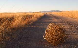 Разница между сеном и соломой. Сено, сенаж, силос и солома: все о кормлении лошади