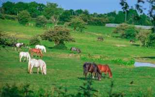 Анализ стихотворения Маяковского В.В. «Хорошее отношение к лошадям. Анализ стихотворения «Хорошее отношение к лошадям» Маяковский