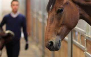 Уход за конями. Разведение лошадей и правильный уход за ними. Что включает в себя понятие – уход за лошадьми
