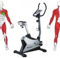 Велотренажер какие группы мышц работают. Велотренажер какие мышцы работают