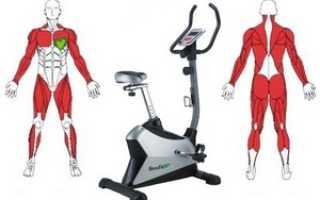 Какие группы мышц задействованы на велотренажере. Велотренажер: какие мышцы работают
