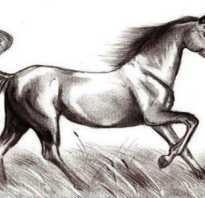 Нарисовать лошадь поэтапно карандашом. Рисуем запряженную карету. Как нарисовать бегущую лошадь
