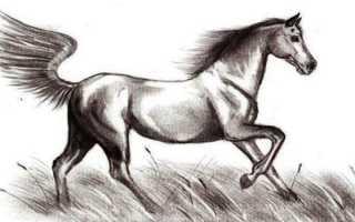 Мастер-класс «Рисование лошади поэтапно для детей подготовительной группы. Как нарисовать лошадь поэтапно карандашом: уроки для детей. Как нарисовать лошадь на дыбах