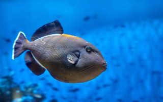 Есть ли у рыб интеллект? Есть ли у рыбы сердце