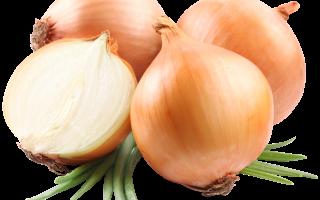 Какой процент людей не любят лук. Почему некоторые люди не едят лук? Снижает уровень холестерина